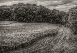 """Farm Field 2"" by Jerry Freedner.  Courtesy of Jerry Freedner (www.jerryfreedner.com)"